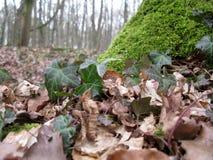 Trädgräsplan och sidor Royaltyfri Bild