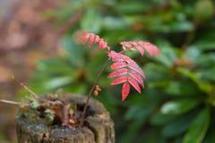 Trädgrodd i höstfärger royaltyfria foton