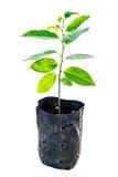 Trädgrodd i påseplast- Fotografering för Bildbyråer