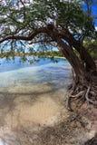 Trädhängningar över den tropiska liten stackarefjärden härbärgerar i St Thomas, Jungfruöarna Fotografering för Bildbyråer
