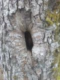 Trädhål Arkivbilder