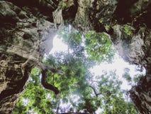 Trädhimmel utomhus- thai Thailand Arkivbild