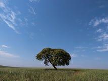 Trädhorisont Arkivfoto