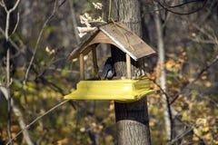 Trädhus för fåglarna Fotografering för Bildbyråer