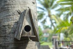 Trädhus för fåglarna Arkivfoton