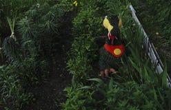 Trädiagramet av personen för garnering av en trädgård eller ge sig Fotografering för Bildbyråer