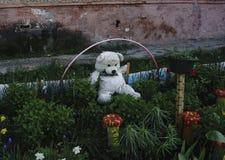 Trädiagramet av personen för garnering av en trädgård eller ge sig Arkivbilder