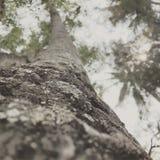 Trädintryck Arkivbild