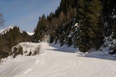 Trädkörningar på en Ski Resort i Europa arkivfoton