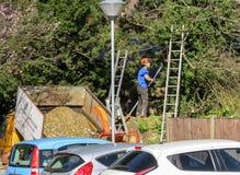 Trädkirurg som beskär filialer i en parkeringshus Royaltyfri Foto