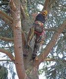 Trädkirurg som klättrar ett träd med chainsawen arkivbilder