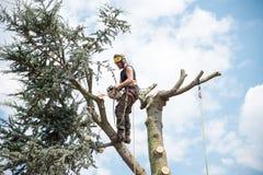Trädkirurg upptill av ett träd arkivfoto