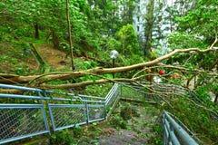 Trädkollaps efter tyfon arkivfoto