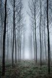 Trädkoloni i dimma Royaltyfria Bilder