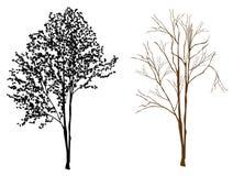 Trädkontur vektor illustrationer