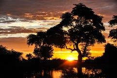 Trädkontur, afrikansk solnedgång royaltyfri fotografi
