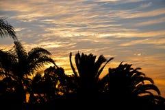 Trädkontur i en orange solnedgånghimmel Royaltyfri Bild