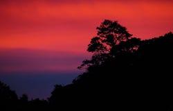 Trädkontur med en solnedgånghimmel i bakgrunden arkivfoton