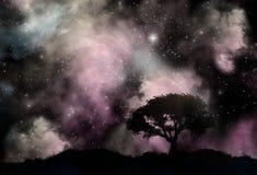 Trädkontur mot en starfieldhimmel Arkivbilder