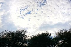 Trädkontur på bakgrund för blå himmel och moln Royaltyfri Foto