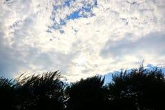 Trädkontur på bakgrund för blå himmel och moln Royaltyfri Bild