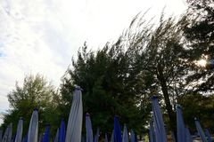 Trädkontur på bakgrund för blå himmel och moln Fotografering för Bildbyråer