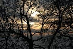 Trädkontur på färgrik solnedgång Royaltyfri Fotografi