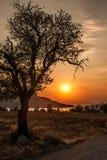 Trädkontur på solnedgångbakgrund, Egina, Grekland Arkivbilder