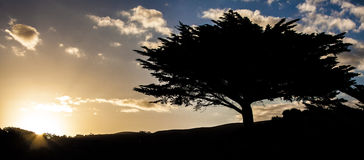 Trädkontur på solnedgången Arkivfoto