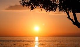 Trädkontur på solnedgången Royaltyfri Bild