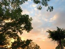 Trädkontur under solnedgång Fotografering för Bildbyråer