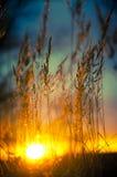 Trädkontur under solnedgång Arkivbild