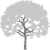 Trädkonturdiagram på en vit bakgrund Arkivbild