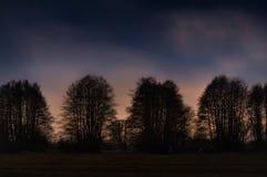 Trädkonturer på solnedgången Arkivbild