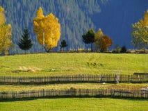 Trädlövverk färgar höststaketet royaltyfri foto