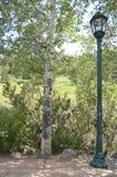 Trädlampstolpe Fotografering för Bildbyråer