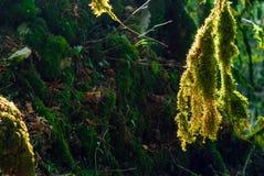 Trädlav i solljus arkivfoto