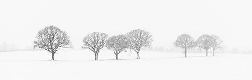 Trädlinje i snön royaltyfri bild