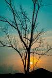 Trädmodell Arkivfoto