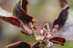 Trädmyror på överkanten av blomman Royaltyfria Foton