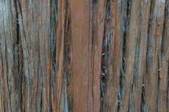 Trädnärbild Arkivfoton