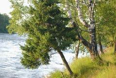 Trädnedgång till floden royaltyfri foto