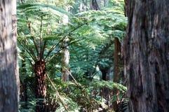 Trädormbunke i skogen Royaltyfri Fotografi