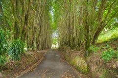Trädpasserande Arkivfoton