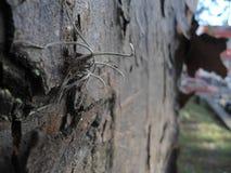 Trädperspektiv Arkivfoton