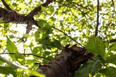 Trädperspektiv upp Arkivbild