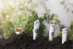Trädplantera och tillväxt upp på pengarmyntet som staplas på ljus kula med jord och dollar, sedel begrepp i räddningvärldsenviron fotografering för bildbyråer