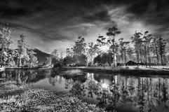 Trädreflexion fotografering för bildbyråer