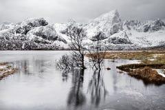 Trädreflexion i sjön framme av en vinterbergskedja fotografering för bildbyråer