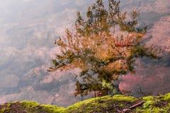 Trädreflexion i sjövattnet Royaltyfri Bild